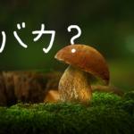 お手頃に松茸を味わえる!?バカマツタケ人工栽培に成功!