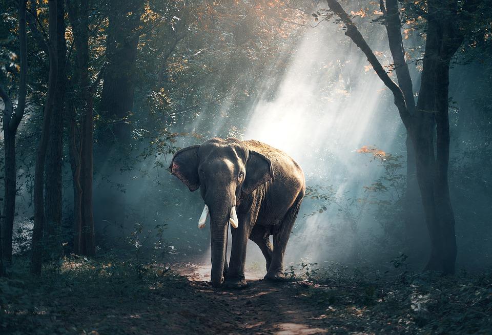 豊橋総合動植物公園が「動物スポンサー」を募集中!