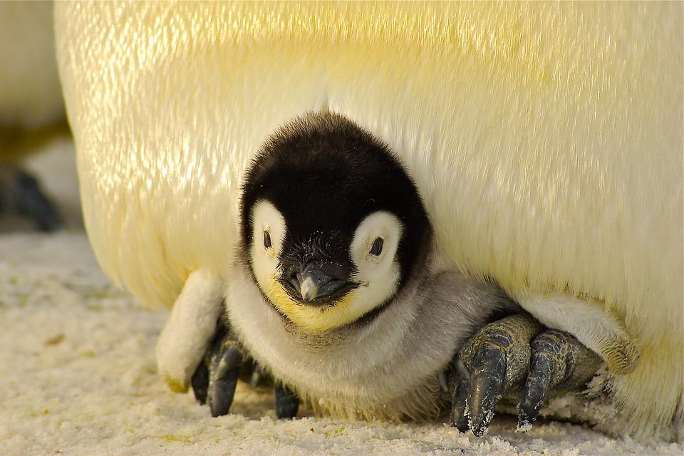 豊橋総合動植物公園(のんほいパーク)のペンギンが出産ラッシュ