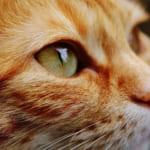 「保護猫のすすめ」~猫を家族に迎えたくなったら~
