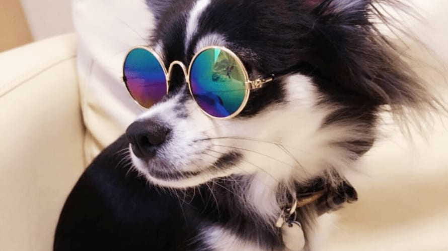 コロナウイルス人から動物感染?犬の嗅覚で早期発見!!??
